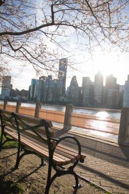 Banc de parc avec des branches de fleur de cerisier à l'île Roosevelt à côté de la rivière est et Manhattan en arrière-plan flou