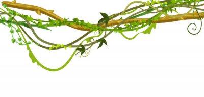 Sticker Bannière de branches de lianes sauvages tordues.