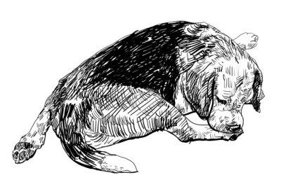 Sticker Beagle se mord doucement sur sa jambe.
