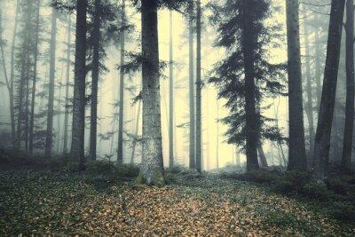 Sticker Beau, brumeux, forêt, arbre, conte de fées Lumière brumeuse de brume dans la forêt.