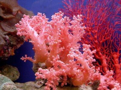 Sticker beau corail