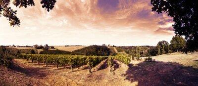 Sticker Beau coucher de soleil sur les vignes en toscane