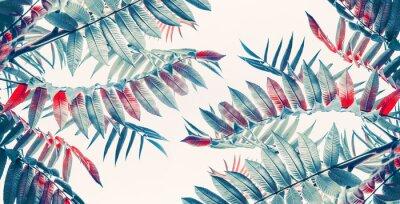 Sticker Beau fond de feuilles tropicales, bannière