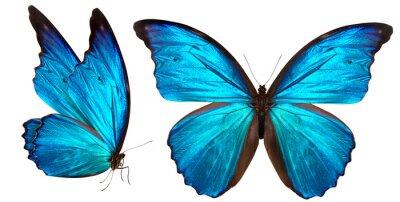 Sticker beau papillon isolé sur blanc