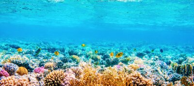 Sticker Beautifiul underwater panoramic view with tropical fish and coral reefs