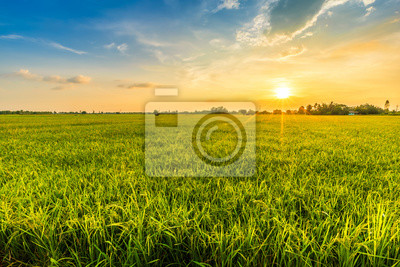 Sticker Beautiful environment landscape of green field cornfield or corn in Asia country agriculture harvest with sunset sky background.
