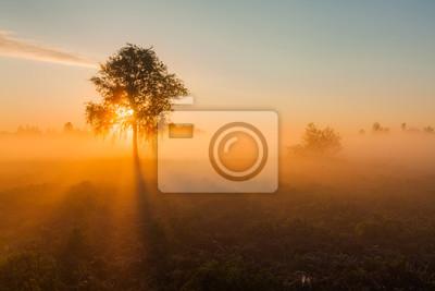 Sticker Belle aurore brumeuse au lever sur un champ arboré