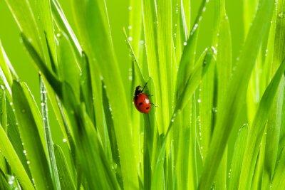 Sticker belle coccinelle sur l'herbe verte