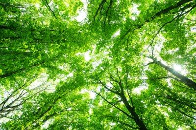 Sticker Belle forêt verte