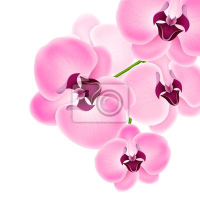 Belle orchidée