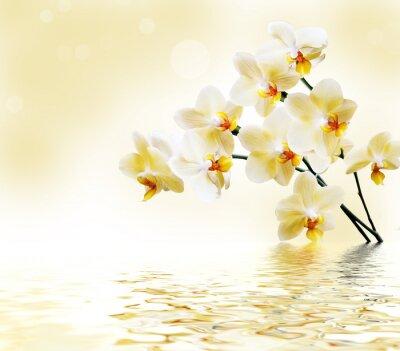 Sticker Belle orchidée blanche