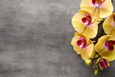 Sticker Belle orchidée rose sur un fond gris.