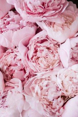 Sticker Belle texture de pivoines roses tendre floraison fraîches aromatiques, vue de près