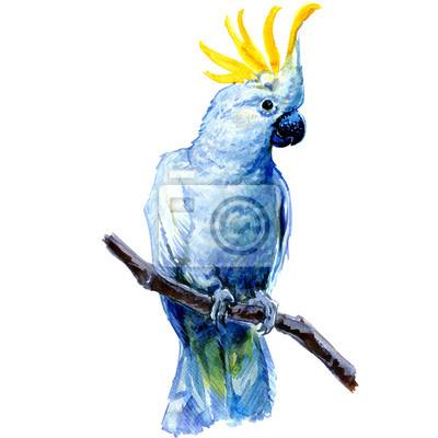 Belle White Cockatoo, Cacatoès soufré debout sur une