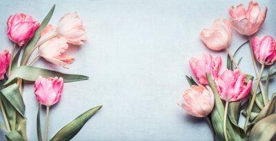 Sticker Belles tulipes en couleur pastel rose sur fond bleu clair, vue de dessus, cadre, bordure. Belle carte de voeux avec des tulipes pour la fête des mères, mariage ou un événement heureux