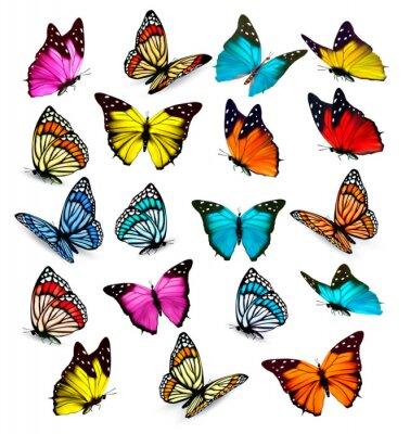 Sticker Big collection de papillons colorés. Vecteur