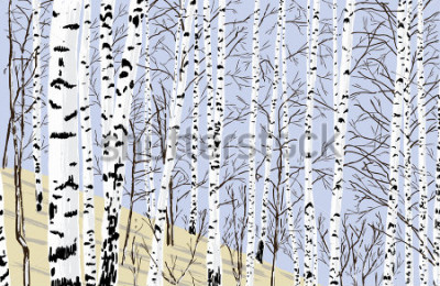 Sticker birch grove in the spring