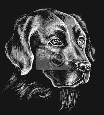 Sticker Black and white labrador sketch