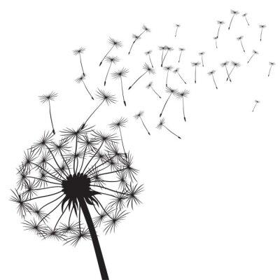 Sticker Black vector dandelions