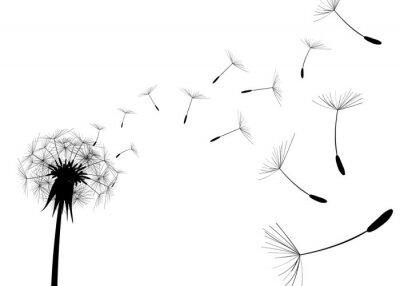 Sticker Blow Dandelion on white background