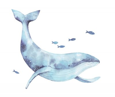 Sticker Blue whale watercolor illustration isolated on white. Big wild underwater animal beautiful blue violet white watercolor whale ballena painting. Mammal marine or oceanic water animal swimming.