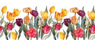 Sticker Bordure horizontale florale. Tulipes colorées sur fond blanc. Illustration botanique. Peinture à l'aquarelle.