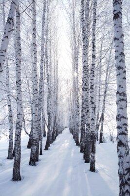 Sticker Bouleau en hiver