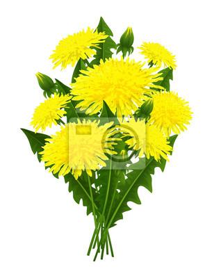 Bouquet de fleurs de pissenlit