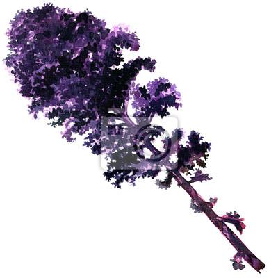 Bouquet, frais, bouclé, rouge, kale, feuille, isolé, aquarelle, Illustration