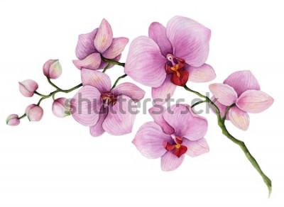 Sticker Branche aquarelle d'orchidée, illustration florale dessinée à la main, isolée sur fond blanc.