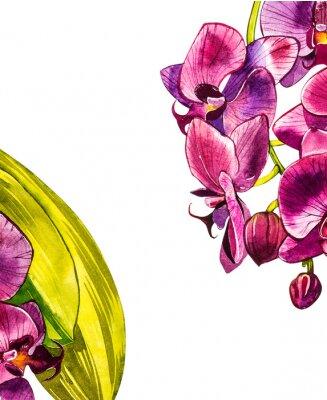 Sticker Branche aquarelle d'orchidée, illustration florale dessinée à la main, isolée sur fond blanc. Illustration aquarelle de flore, peinture botanique, dessin à la main.