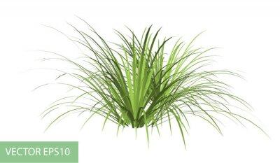 Sticker branche avec des feuilles vertes isolé sur blanc