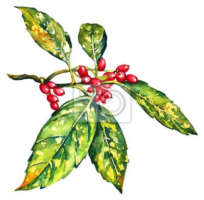 Branche de laurier japonais avec un germe frais, illustration aquarelle peinte à la main. Belle feuilles tachetées d'Aucuba japonica, isolé sur fond blanc. Illustration botanique pour votre conception