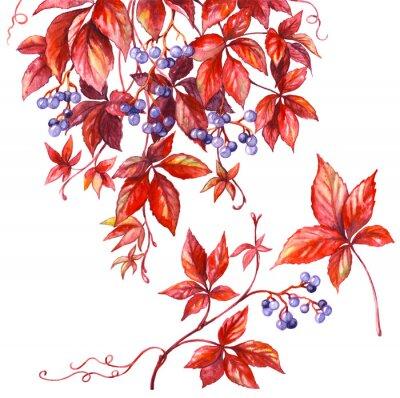 Sticker Branche de raisin sauvage.