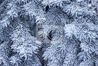 Branche de sapin sur la neige