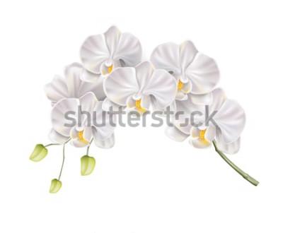 Sticker Branche réaliste de fleur d'orchidée blanche avec des bourgeons sur la tige. Invitation de mariage élégant, conception de décoration de salon spa. Carte d'invitation de mariage de vecteur, élé