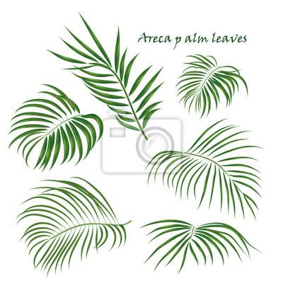 Branchez Les Feuilles Dareca De Palmier Tropical Dessin Realiste
