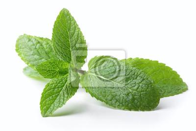 Sticker brindille de feuilles de menthe isolé sur fond blanc