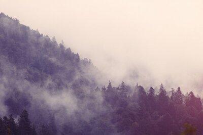 Sticker Brouillard dans la forêt