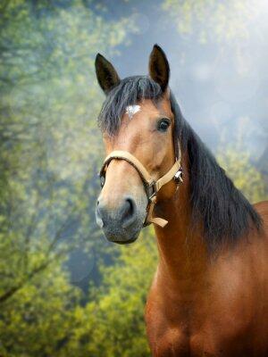 Sticker Brun, cheval, ressort, paysage