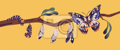 Sticker Butterfly life cycle - caterpillar, larva, pupa, imago eclosion. Stages of metamorphosis, growth and transformation process of winged insect on tree branch. Flat cartoon colorful vector illustration.