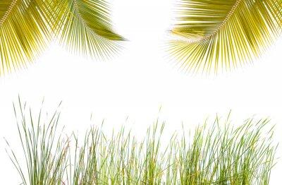 Sticker Cadre végétal, herbes et palmes, fond blanc