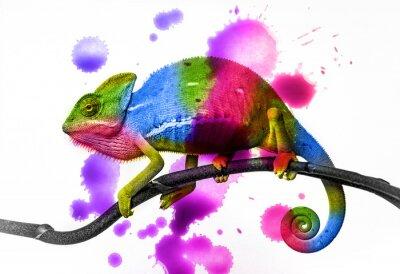 Sticker Caméléon - couleurs