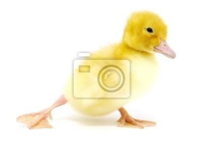 canard jaune