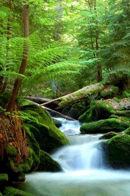 Cascade dans le parc national de Sumava République tchèque