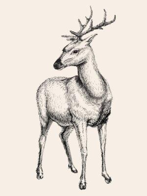 Sticker Cerfs, vecteur, Illustration, main, dessiné, croquis