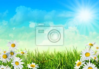 Champ d'été avec herbe et marguerites
