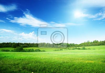 Sticker champ d'herbe et ciel parfait