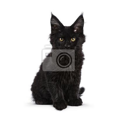noir chatte Quelle est la taille d'un petit pénis