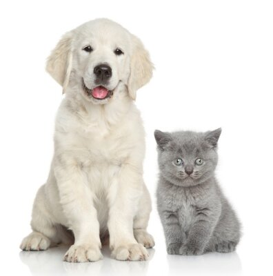 Sticker Chien et chat